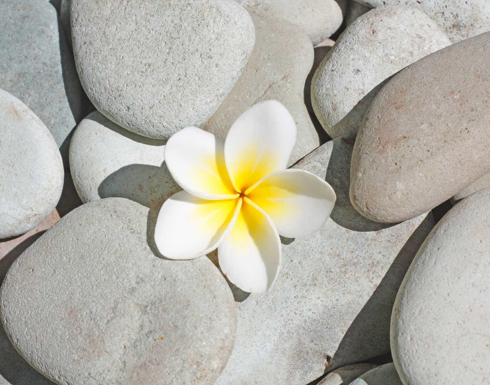 blomma och stenar